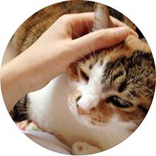 プロフィール画像(猫)